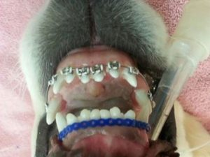 HT_Dog_braces_2_er_160229_4x3_992