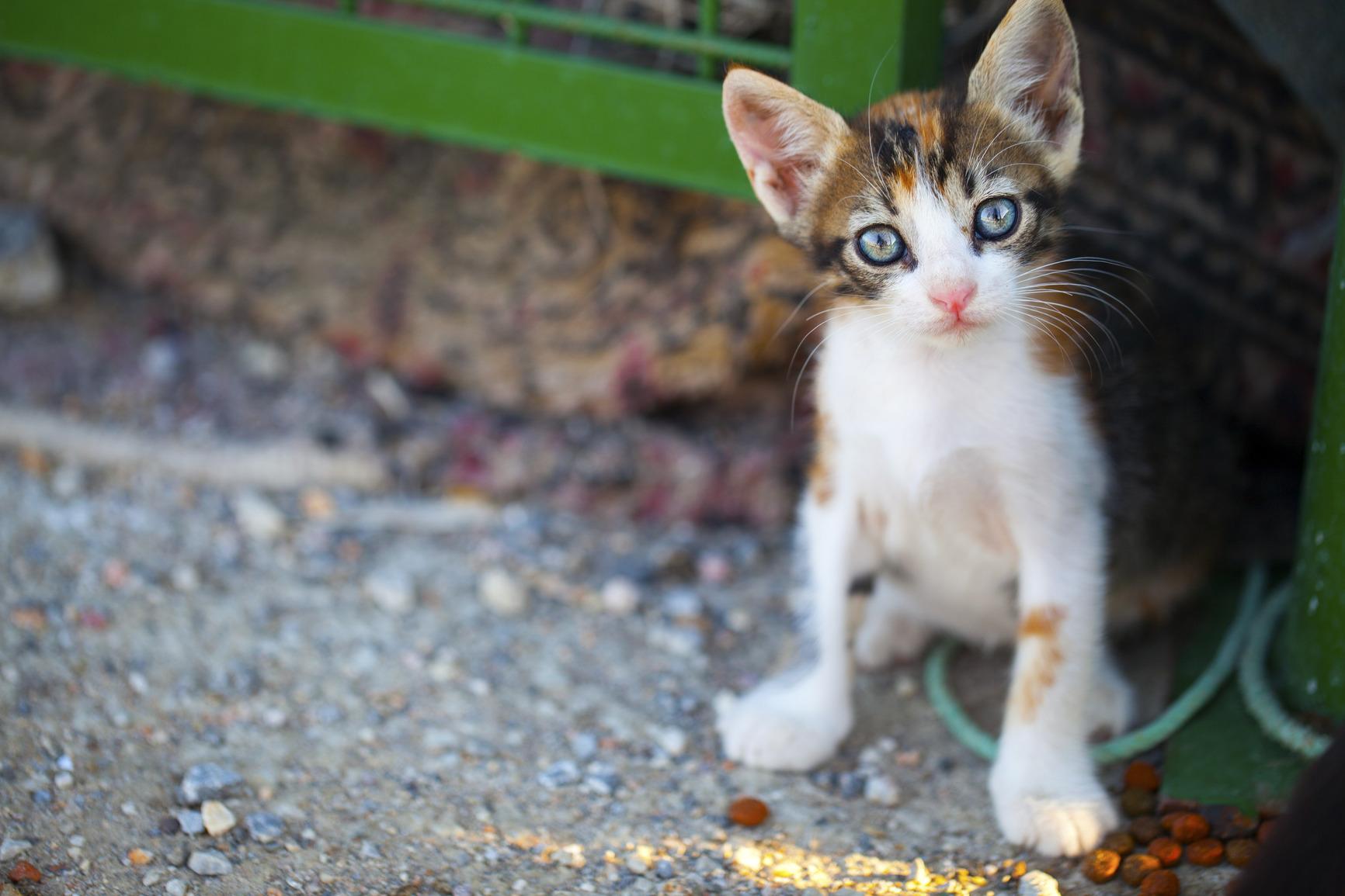 photodune-5116590-cat-m