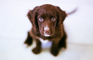 4 Tricks To House Train Your Puppy