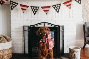 July 4th Pet Safety